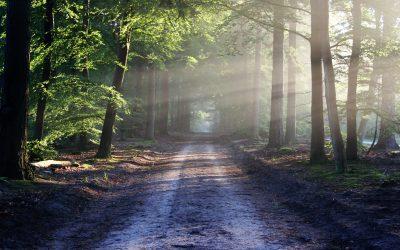 Choose Your Path (Part 1)